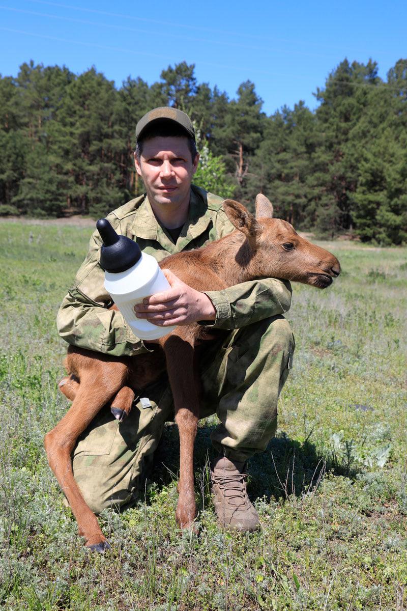 На Чернігівщині військовий пенсіонер врятував лосеня (Фото)