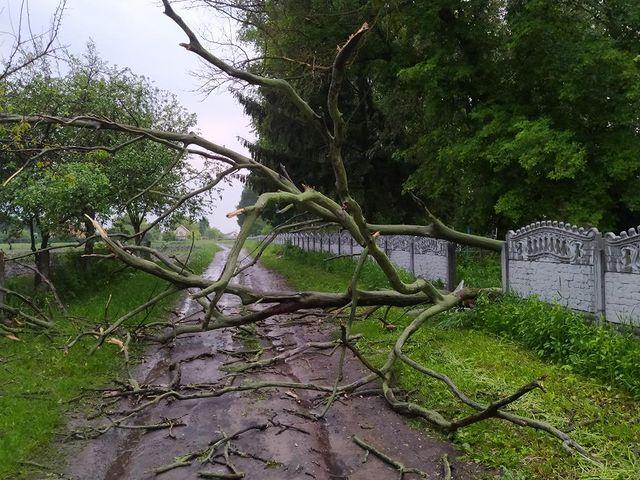 У Мені повалене дерево поламало паркан на цвинтарі (Фотофакт)