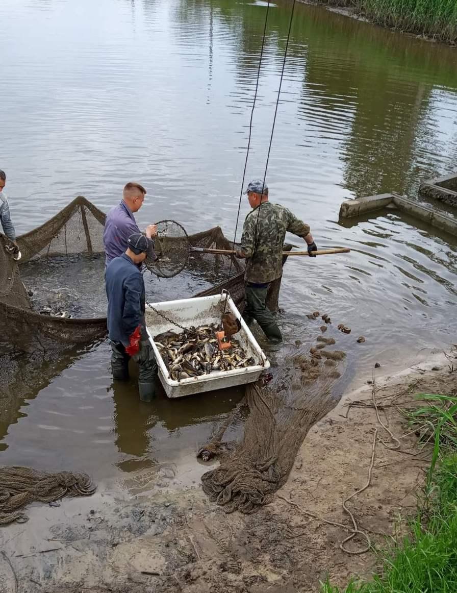 У річку Стрижень вселено півтори тонни молоді коропа (Фото)