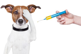 vaktsynatsiya-shheplennya-ukol-shpryts-sobaka