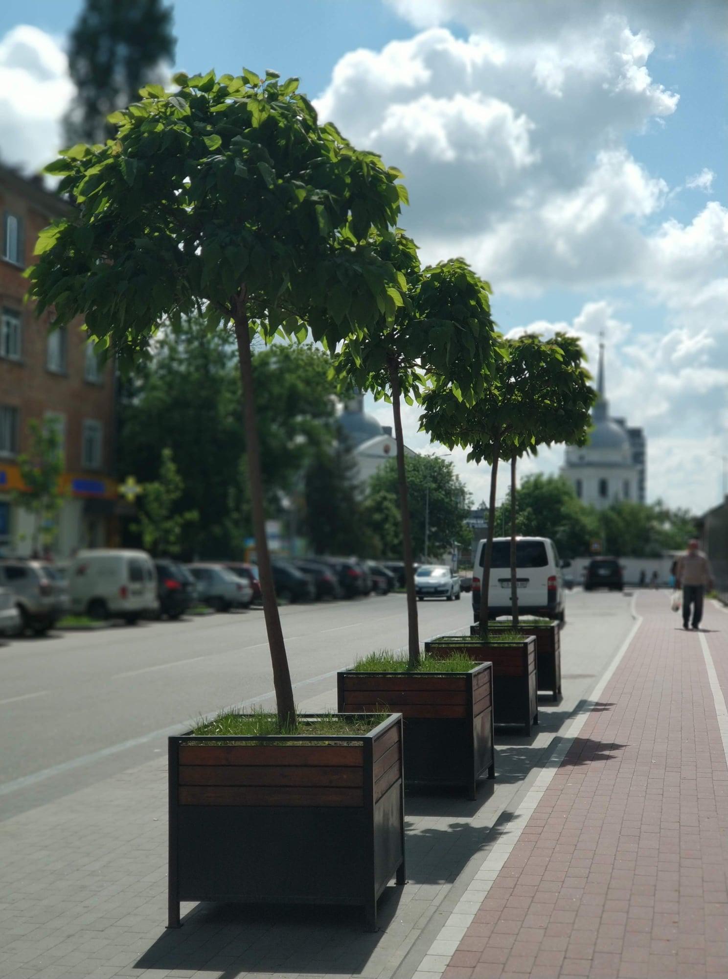 На вулиці Хлібопекарській у Чернігові висадять 53 катальпи (Фото)