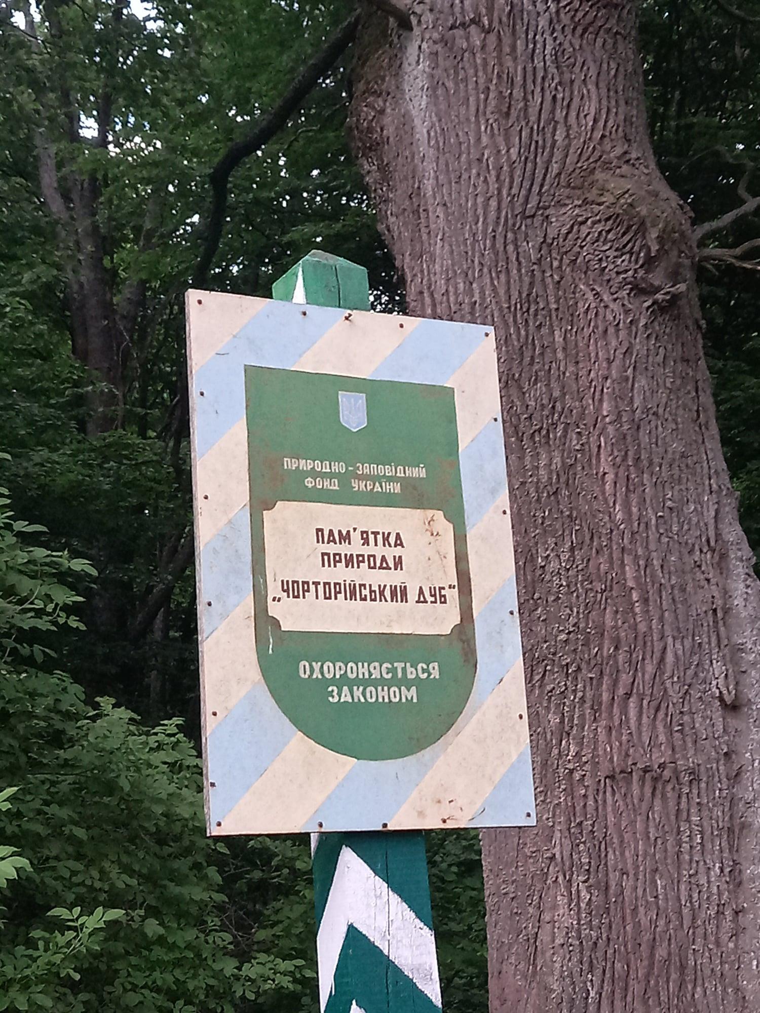 На Чернігівщині росте дуб, який пережив не одну сотню років (Фото)