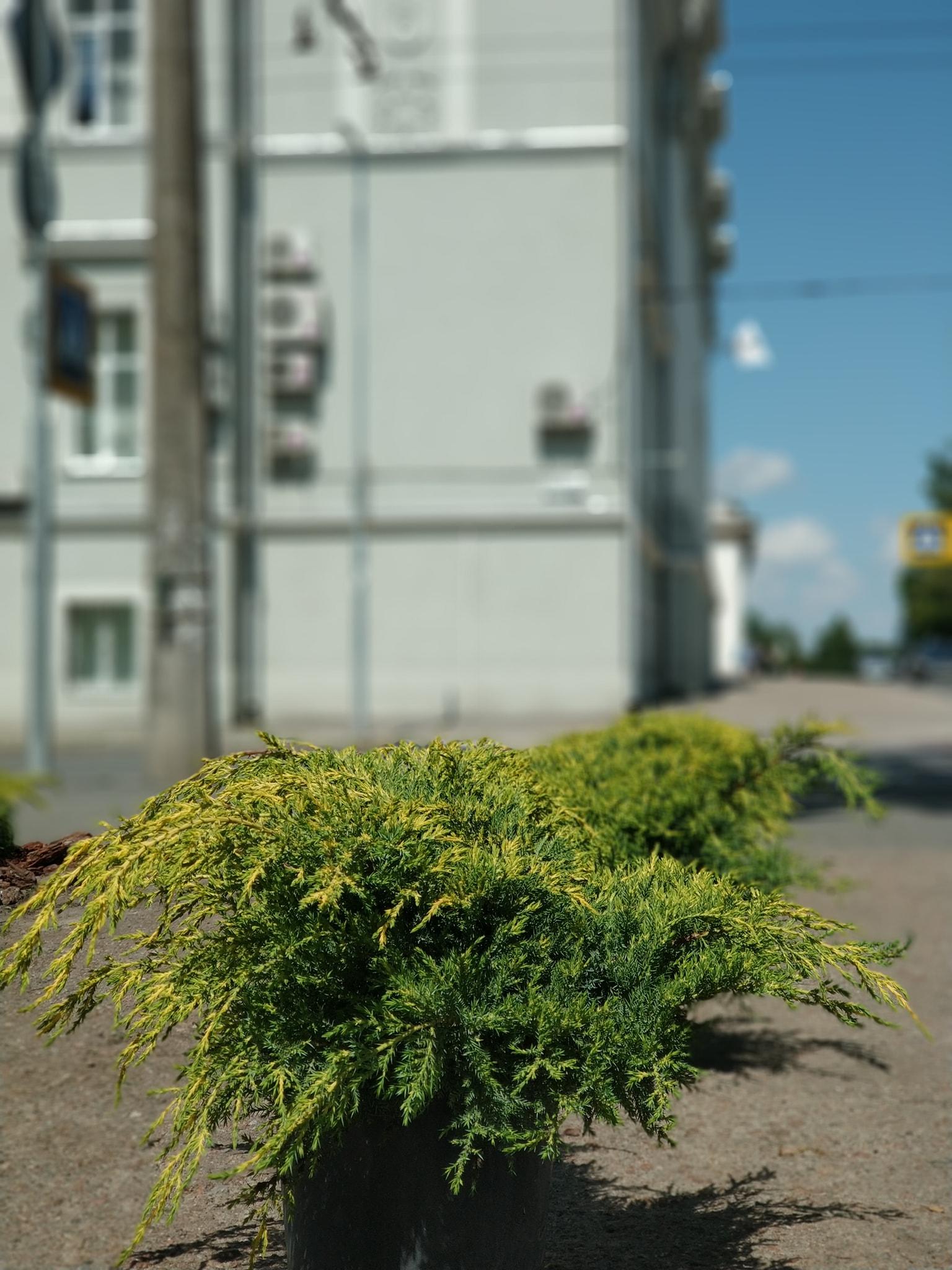 У Чернігові висаджують нові клумби (Фото)