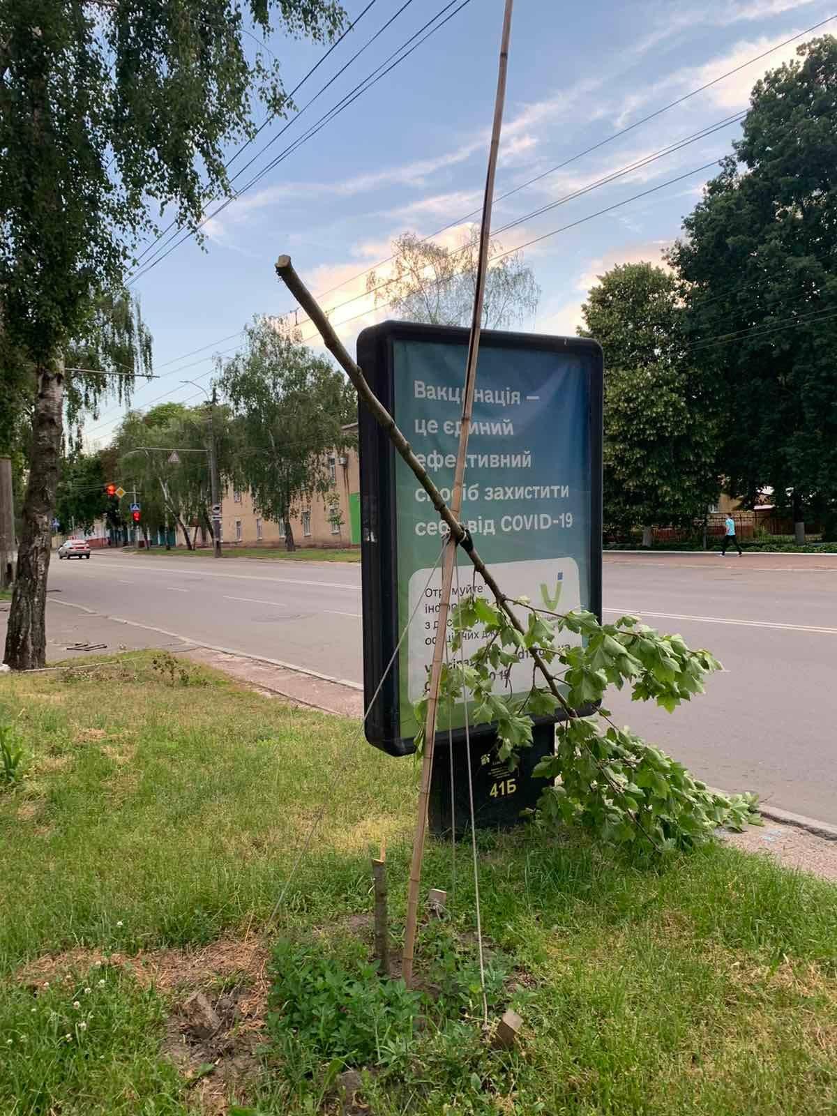 У Чернігові вандали зламали дерево (Фотофакт)