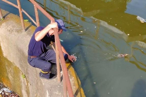 Чернігівські рятувальники знову визволили з пастки диких каченят та черепаху (Фото)