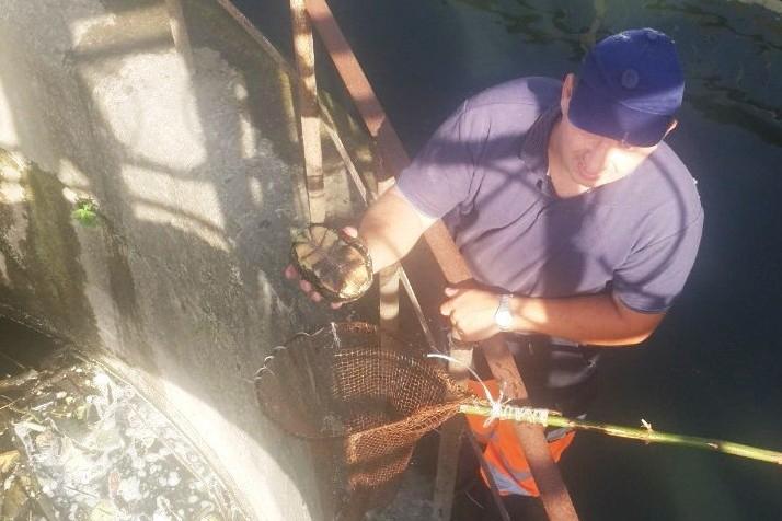 Чернігівські рятувальники врятували з пастки каченят, черепаху та вужа (Фото)