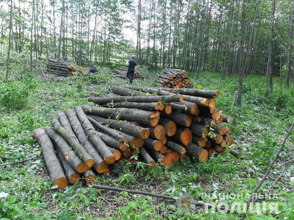 На Чернігівщині судитимуть «чорних лісорубів»