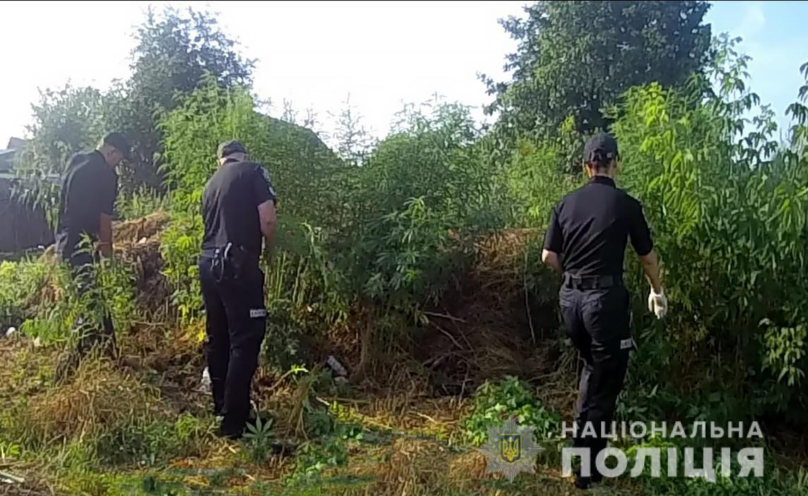 35-річний житель Чернігівщини незаконно вирощував коноплі (Фото)