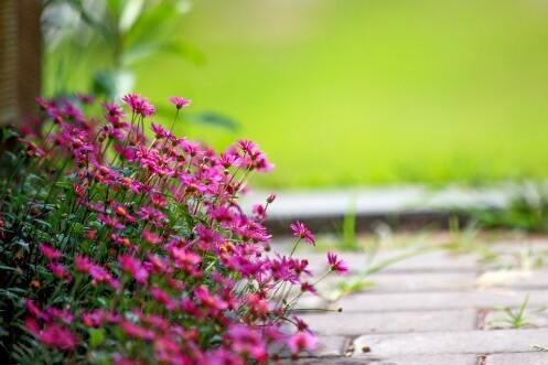 flowers-3241253_960_720_500x333