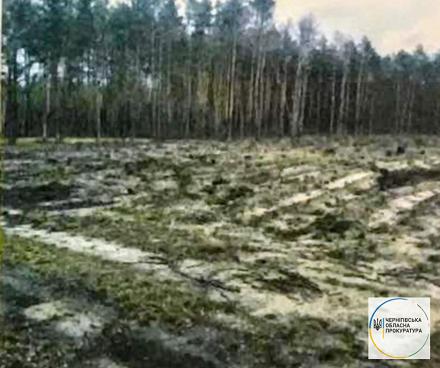 На Чернігівщині вирубали дерев майже на 2 мільйона гривень