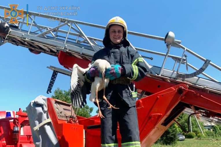 На Чернігівщині надзвичайники врятували лелеченя (Фото)