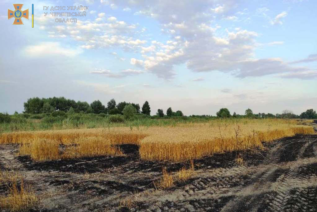 Пожежу пшеничного поля на Чернігівщині ліквідовано (Фото)