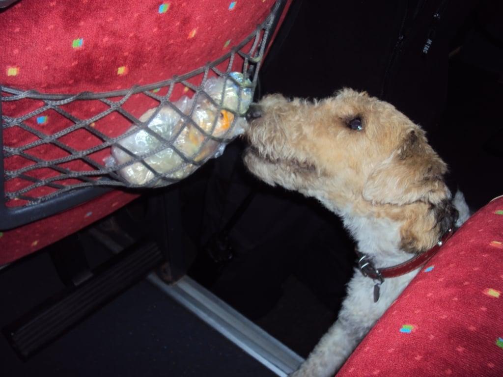 У Сеньківці прикордонний пес Фікс зреагував на наркотики (Фото)