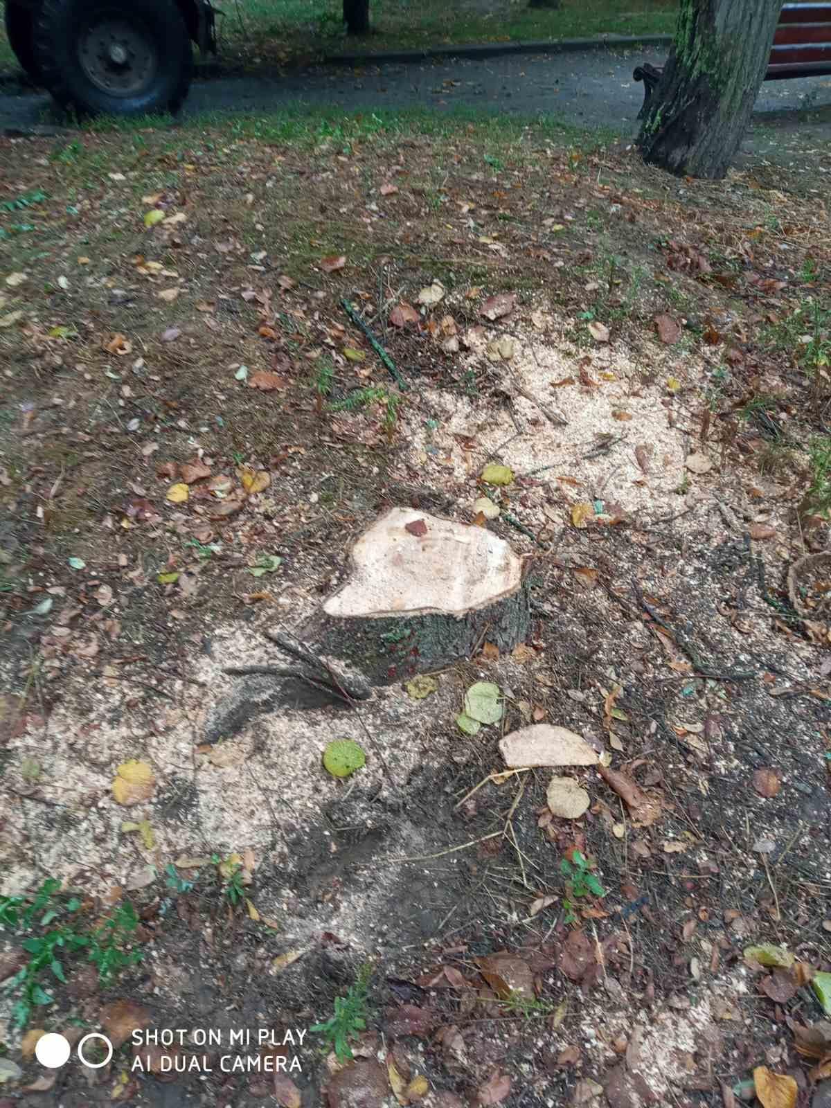 У центрі Чернігова та на Болдиних горах спилюють дерева (Фотофакт)