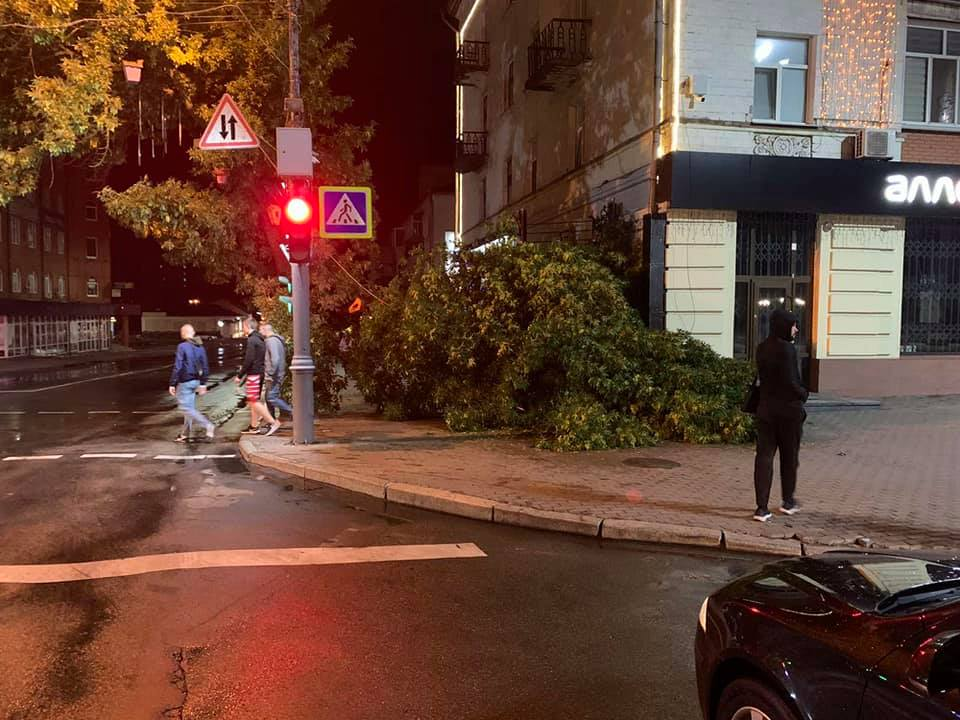 У Ніжині впало дерево і зачепило перехожого (Фото)