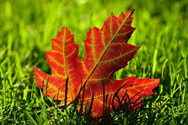 autumn-36806841280
