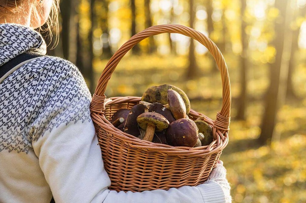devushka-les-korzina-s-gribami-mushroom-basket