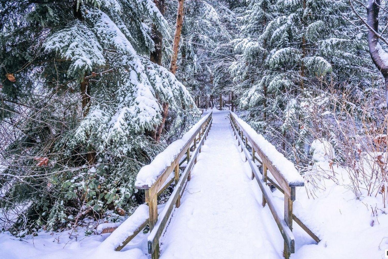 most-v-zimnem-lesu-oboi-1920x1080_48
