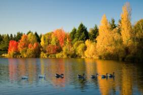 depositphotos_1058020-stock-photo-flock-of-wild-geese-in